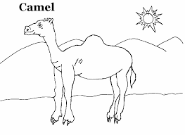 Small Picture 95 ideas Camel Picture For Kids on kankanwzcom