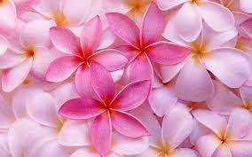 Tropical Flowers Wallpapers - Wallpaper ...