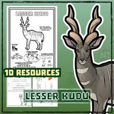 Small Picture 225 best Zoo Wild Educational Resources images on Pinterest
