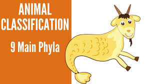 Animal Classification 9 Main Phyla Of Animals