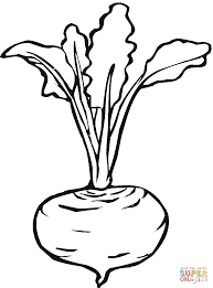 Beetroot 7 Coloring Page Free Vegetables