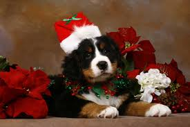 christmas puppies wallpaper.  Puppies On Christmas Puppies Wallpaper A
