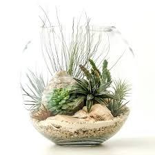 air plant terrarium diy hanging