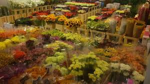 Image result for flower post Włocławek