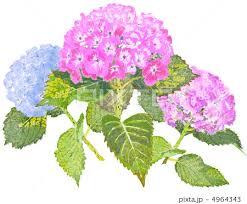 「花のイラスト」の画像検索結果