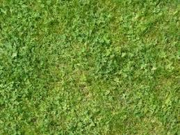 Dirt grass texture seamless Opengameart Grass Texture Bigtexture Grass Textures Texturelib