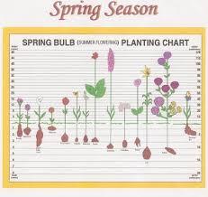 Spring Bulb Planting Chart Henrietta Garden Club