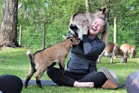 places where you can do yoga with goats