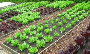 tips on organic vegetable gardening