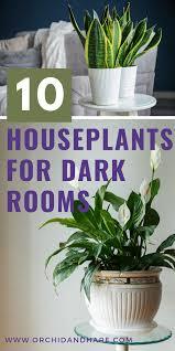 10 low light house plants indoor