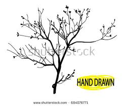 tree branch with leaves vector. dry branch. tree branch without leaves. drawing by hand in vintage style, with leaves vector n