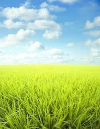 grass and sky backgrounds.  And Blue Sky Grass From The Highdefinition Picture 3 On Grass And Sky Backgrounds S