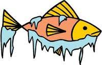 Image result for cold fish