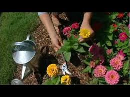 Small Picture Cut Flower Garden YouTube