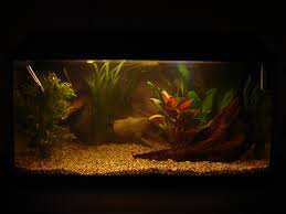 for my new fish tank i wanted to have a 3d background and decided to build it myself there are a lot of pictures you can in the s which you can
