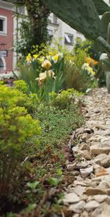 Oltre 25 fantastiche idee su giardino secco su pinterest