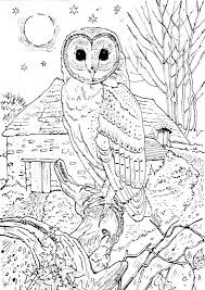 Small Picture owl coloring pages free printables Colouring pages for kids fire
