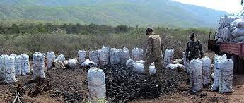 Resultado de imagen para deforestacion bahoruco