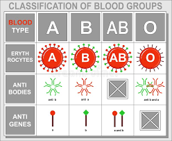 Different Blood Types Chart Chart Of Blood Type Background Information Clinic Blank