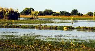 Image result for farmers burn wetlands