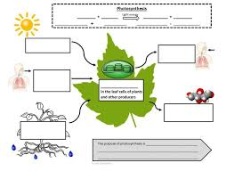 graphic notes to help students master photosynthesis and cellular respiration use this as a support for