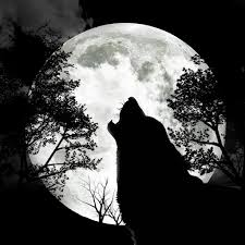 black and white wolf howling photography. Beautiful Howling With Black And White Wolf Howling Photography H