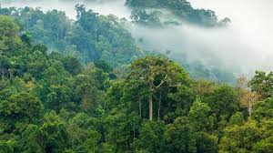 amazon rainforest. Plain Rainforest Rainforest In The Morning Mist Inside Amazon O