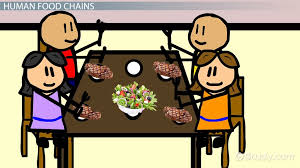 human food chain definition exles video lesson transcript study