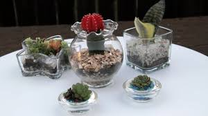 how to create succulents in glass containers