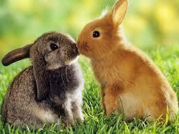 Résultat de recherche d'images pour 'photo de lapin'