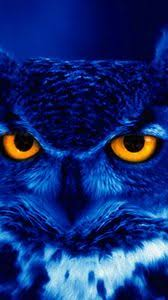 We've gathered more than 5 million images uploaded by our users and sorted them by the most popular ones. Owl Iphone 8 7 6s 6 For Parallax Wallpapers Hd Desktop Backgrounds 938x1668 Images And Pictures