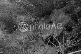 白黒 花形の丸太 No 44299写真素材なら写真ac無料フリー