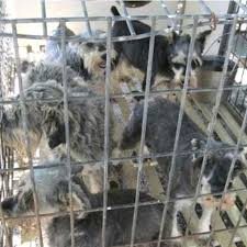 humane society releases of worst puppy mills in the u s
