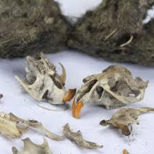 Small Animal Skull Identification Chart All About Owl Pellets Carolina Com