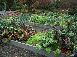 Fall Garden Update Using Cover Crops And Straw Mulch  Digging The Fall Garden Crops