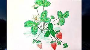 Vẽ cây dâu tây đơn giản | Vẽ quả dâu tây ngon hấp dẫn|Draw strawberry|Draw  easy strawberry plant - YouTube