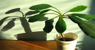 best low light house plants to grow at home lighting lovely very low light indoor plants