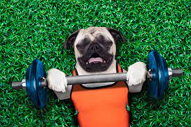 good fitness program for your dog