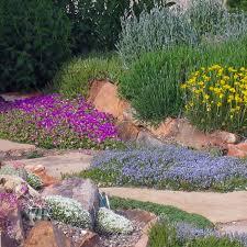 plants healthy in the heat
