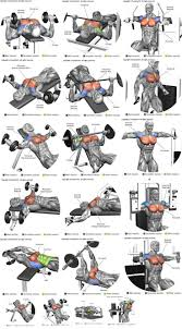 workout experiences chest triceps biceps shoulders back legs abs others