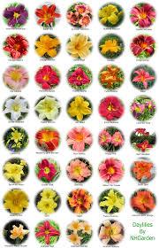 flower names 10