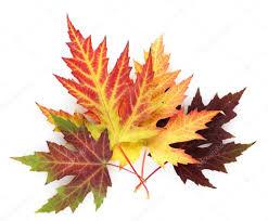 """Результат пошуку зображень за запитом """"осенние листья"""""""