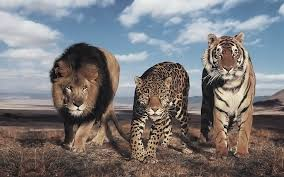 The Largest Wild Cats Top 10 Dinoanimals Com