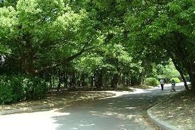 「服部緑地公園 画像」の画像検索結果