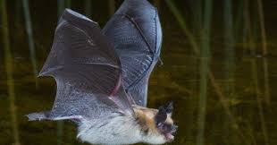 found a bat in my house uk. do you need rabies shots if a bat gets in your house? experts disagree. | huffpost found my house uk