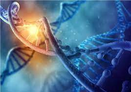 El papel clave de las células madre en la Medicina Regenerativa - El médico  interactivo