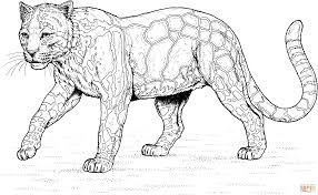 Walking Clouded Leopard Coloring Page Free Printable Coloring