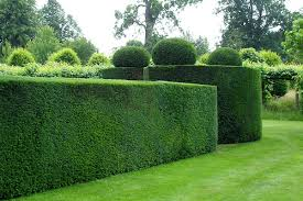 Small Picture Garden Design Garden Design with House Gardens Home Garden