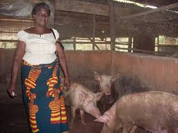 Pig Farming Business Plan Pig Farming Business Is A Profitable Venture See How To Start A Pig