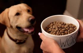 The Best Diabetic Pet Foods